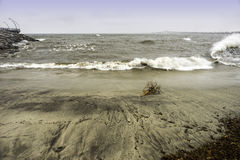 Driftwood stranded on beach, strong waves crashing royalty free stock photos