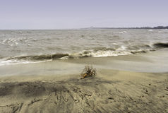Driftwood stranded on a sandy beach, a choppy lake with waves cr Royalty Free Stock Image