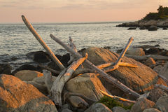 Driftwood strewn over glacial boulders, Hammonasset Beach, Madis. Driftwood logs strewn across glacial boulder, beach at sunset, Meigs Point, Hammonasset State stock image