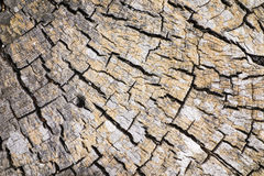 Driftwood Stump Nature Abstract stock images