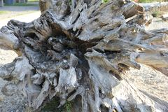 Driftwood Stump Underside royalty free stock photography