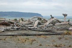 Driftwood sulla spiaggia Fotografie Stock