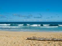 Driftwood sulla spiaggia del Kauai Fotografia Stock Libera da Diritti
