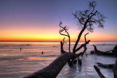 Driftwood and sunrise hdr Royalty Free Stock Images