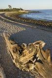 Driftwood at sunset on Hammonasset Beach, Madison, Connecticut. royalty free stock photography