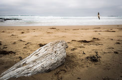 Driftwood on a Surf Beach Royalty Free Stock Photography