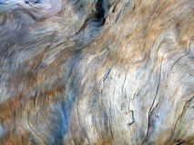 Driftwood Texture 2. Close-up of a piece of driftwood. Wind and sand have given this burled wood a smooth, almost satiny finish. Interesting for backgrounds and Royalty Free Stock Image