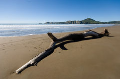Driftwood on Tolaga Bay Stock Photo