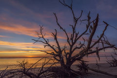 Driftwood and Tree Branches on a Georgia Beach at Sunset Stock Photos