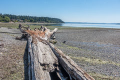 Driftwood Tree Landscape Stock Photography