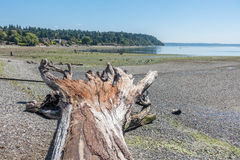 Driftwood Tree Landscape 3 Royalty Free Stock Photography