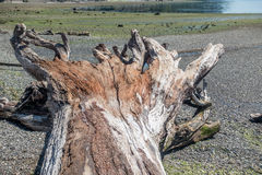 Driftwood Tree Landscape 4 Royalty Free Stock Photography