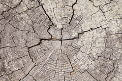Driftwood Tree Rings With Cracks Stock Image