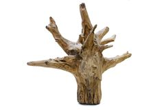 Driftwood tree stump Stock Images