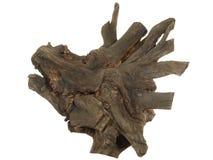 Driftwood tree stump isolated on white background Royalty Free Stock Image