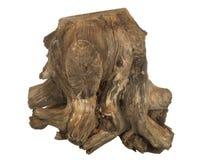 Driftwood tree stump isolated on white background Stock Images