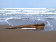 Driftwood tree trunk on sand beach Royalty Free Stock Image