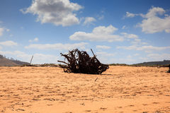Driftwood Trees Branches Royalty Free Stock Image