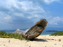 Driftwood on tropical beach. Driftwood on tropical beach on one of the islands of Honda Bay, near Puerto Princessa, Palawan, Philippines royalty free stock image