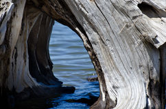 Driftwood Tunnel on the Water Royalty Free Stock Photos