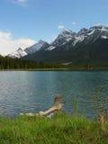 Driftwood in un lago della montagna Immagini Stock