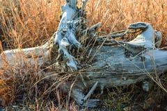Driftwood w trawie obrazy stock