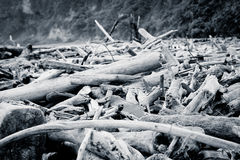 Driftwood washed up on the beach, color Processed Royalty Free Stock Photo