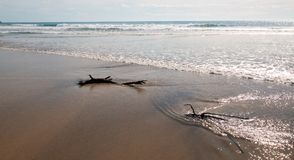 Driftwood in the water at Cerritos Beach surf spot in Baja California in Mexico. BCS Stock Image