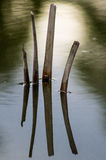 Driftwood on the water surface. Stock Photo