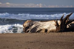 Driftwood Waves Royalty Free Stock Image