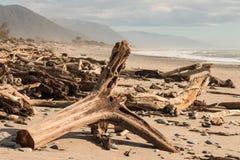 Driftwood on West Coast beach in South Island Stock Photo