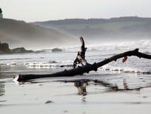 driftwood whitby Γιορκσάιρ στοκ φωτογραφία