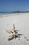 Driftwood on white sand beach Royalty Free Stock Photos