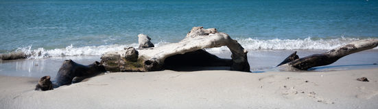 Driftwood on white sand tropical beach during surf Stock Photos