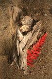 Driftwood y helecho Imagen de archivo libre de regalías