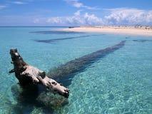 Driftwood y playa Imágenes de archivo libres de regalías