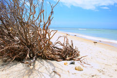 Driftwood y shelles Fotos de archivo