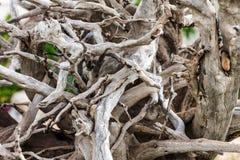 Driftwood zakończenie fotografia royalty free