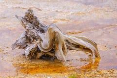 Driftwood zamknięty Obrazy Royalty Free