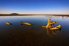 Driftwoodreflexioner Arkivbilder