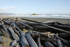 Free Driftwoods On Beach Royalty Free Stock Photos - 5420838