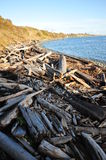 Driftwoods on seashore Stock Photography