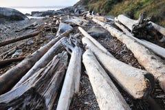 Driftwoods on seashore Royalty Free Stock Images