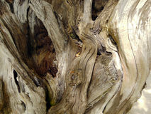 Drifwood. Close up old driftwood in daytime Royalty Free Stock Photo