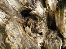 Drifwood. Close up old driftwood in daytime Royalty Free Stock Images