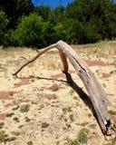 Drijfhout dat dichtbij Eiken Kreek, Sedona Arizona wordt verlaten Royalty-vrije Stock Fotografie
