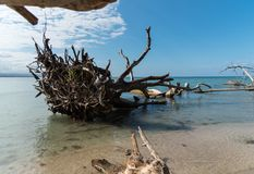 Drijfhout in de Oceaan Strand in de voorgrond Blauwe oceaan in C stock foto