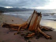 Drijfhout die op zandig strand rusten Royalty-vrije Stock Fotografie