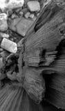 Drijfhout en kiezelstenen Stock Foto