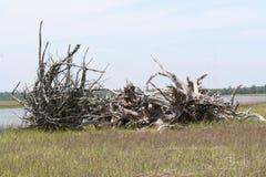 Drijfhout in het Charleston South Carolina-moeras wordt verzameld dat Stock Fotografie